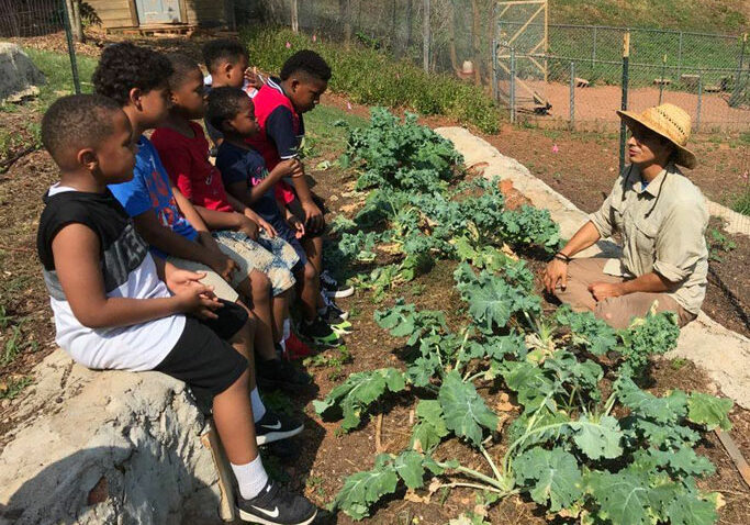 children-learning-about-farming-and-plants
